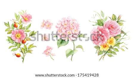Set of watercolor flowers. English roses, dogrose and hydrangea - stock photo
