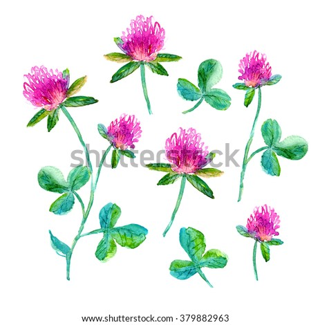 Set of watercolor flowers. Hand drawn clover flower in bright pink with leaves for romantic background, card or decoration