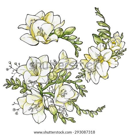 set of watercolor freesia flowers