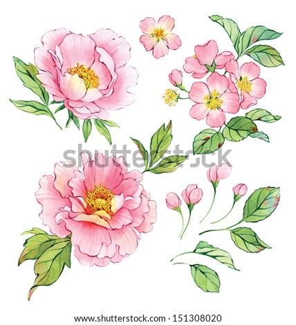 Set of watercolor peonies and cherry blossom. - stock photo