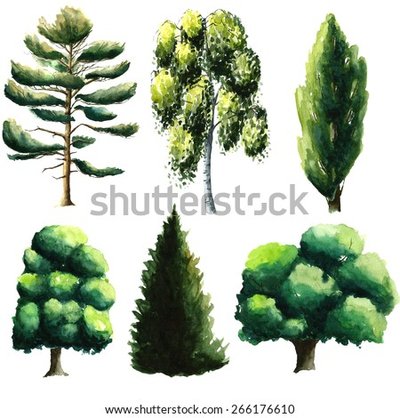Set of watercolor trees: pine, chestnut, oak, fir tree, beech, poplar. - stock photo