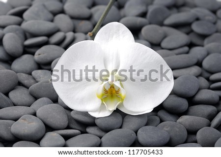 Set of white orchid on pebbles