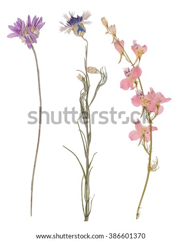 Set of wild dry  pressed flowers and leaves isolated - stock photo