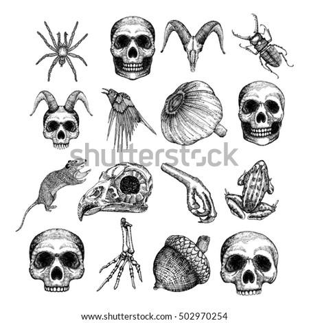 frog skeleton stock images, royalty-free images & vectors, Skeleton