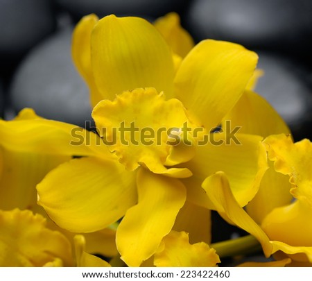 Set of yellow branch orchid on zen stones - stock photo