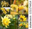 Set of yellow flowers in garden - stock photo