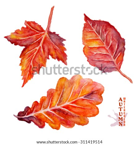 Set of yellow leaves, maple, oak, alder leaf, botanical painting, hand painted watercolor autumn leaves isolated on white, raster illustration - stock photo