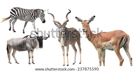 Set of zebra, antelope wildebeest, deer animal isolated on white - stock photo