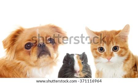 Set pet peeking - stock photo
