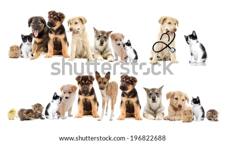 set pets - stock photo