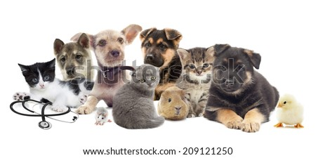 set pets on a white background