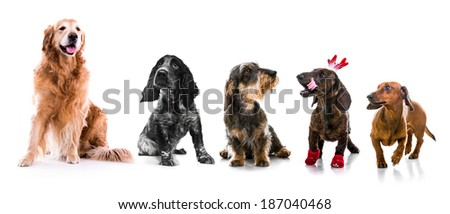 Set photos of dogs  different breeds. Isolated on white background - stock photo