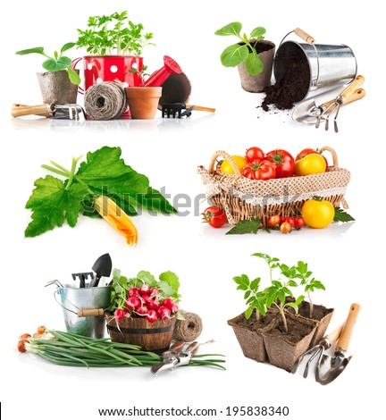 Set seedlings and harvest vegetable. Isolated on white background - stock photo