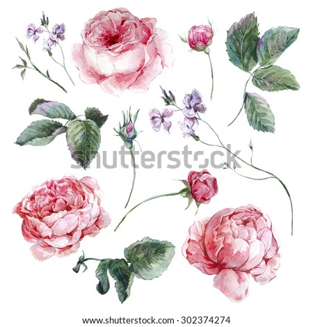 Set vintage watercolor bouquet of roses leaves branches flowers and wildflowers, watercolor illustration isolated on white background - stock photo