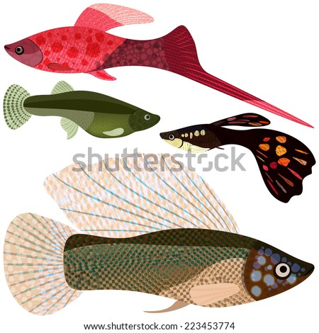 Set viviparous fishes aquarium: sword-bearer, guppy, poecilia velifera, raster graphics.