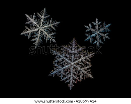 Set with three snowflakes, isolated on black background. This is macro photos of real snow crystals, captured on glass surface with LED back light. These snowflakes are traditional stellar dendrites.