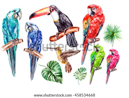Set with watercolor birds, parrot, toucan and colibri. Illustration - stock photo