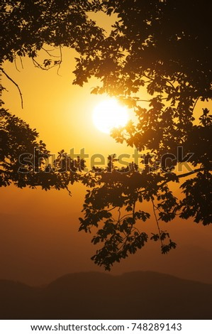 Setting sun on orange sky with leaves in foreground and hills in background.