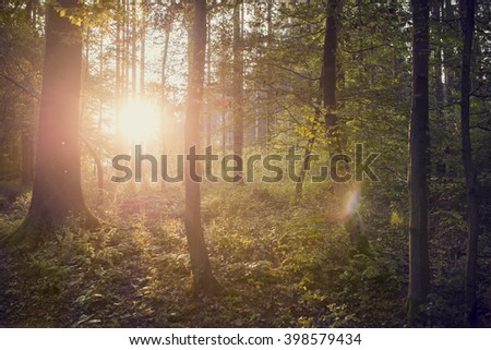 Setting sun shining through tree trunks in beautiful green forest in nature concept, vintage effect toned image.