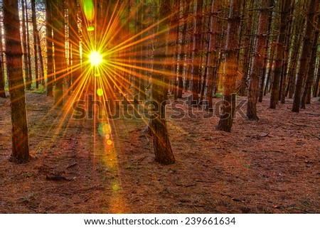 Setting sun through trees in winter time - stock photo
