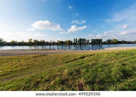 Settlement of Geese and Seagull at River Rhine / Germany