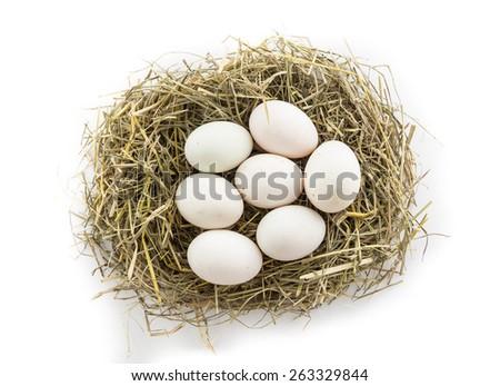 seven duck egg in nest - stock photo