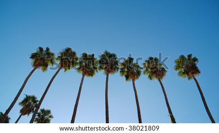 Seven palm trees in a row, with a clear blue sky. Photographed from street level.