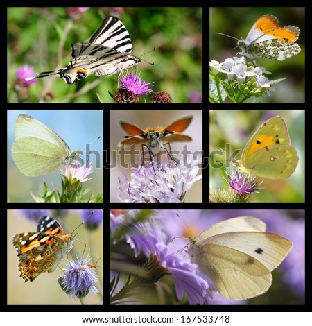 Seven photos mosaic of french butterflies - stock photo