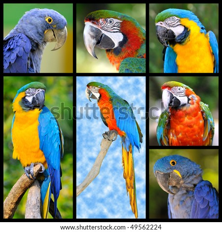 Seven photos mosaic of parrots - stock photo