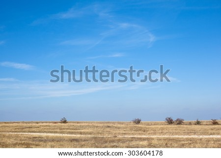 Several bare bush in an autumn steppe