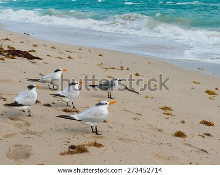 Several birds standing on the beach - stock photo