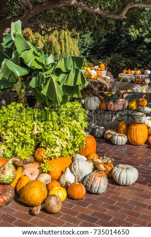 Several clusters of pumpkins and gourds on a brick walkway with large planters of banana leaves and sweet potatoe vine