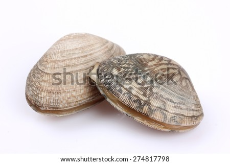 Several fresh clams - stock photo