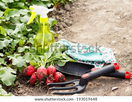 Several gardening tools and healthy radish harvest.