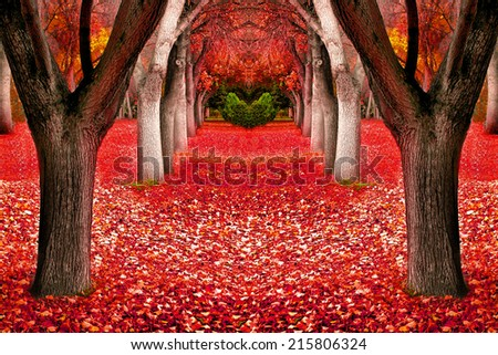 Several in trees in autumn with orange and red leaves - stock photo
