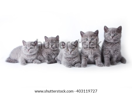 Several kittens lying and looking at the camera (isolated on white)
