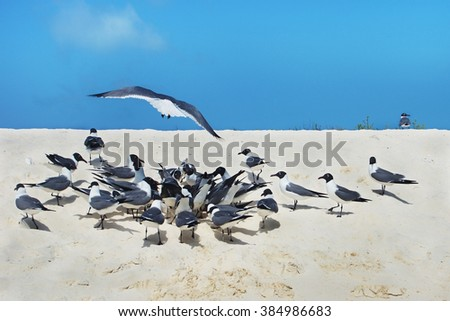 several laughing gulls on the beach