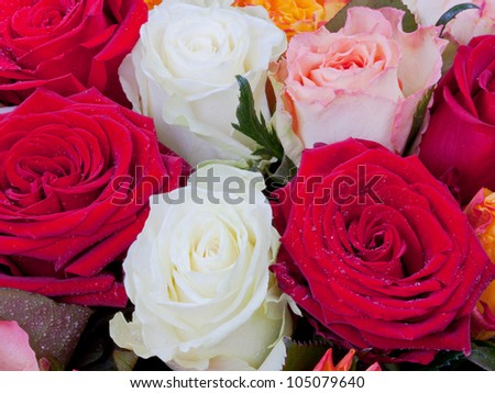 several many-colored roses close up - stock photo