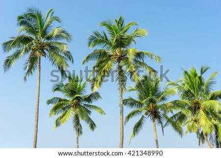 Several palm trees over the clear blue sky