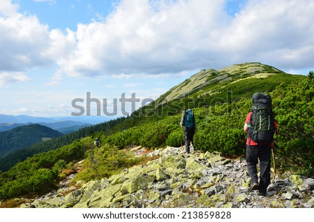 Several people are hiking on the slope overgrown with coniferous shrub. Tourists are carrying the large rucksacks. Hikers are walking through the mossy moraine. - stock photo