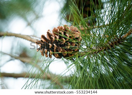Several pine cones fallen on the ground in the forest in a summer day.