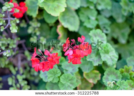 Several red flowers on a green background