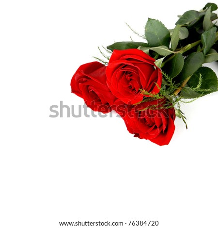 Several Red Roses on white background with copy space - stock photo