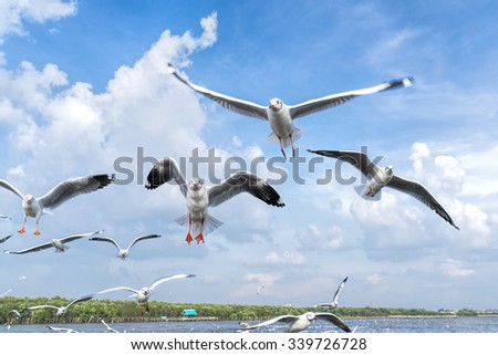 several seagulls flying in a cloudy sky.  - stock photo