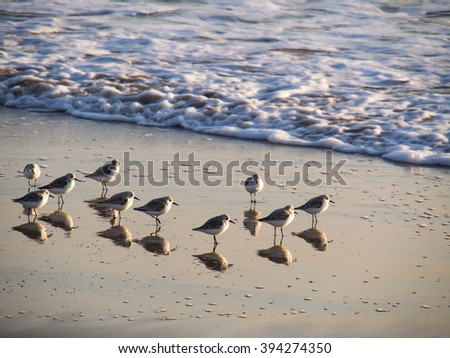 Several seagulls standing on sandy beach