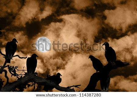 Several vultures are viewed as silhouettes by a rising full moon against a spooky orange sky and clouds - stock photo