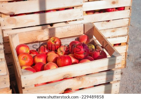 Several wooden boxes with red apples - stock photo