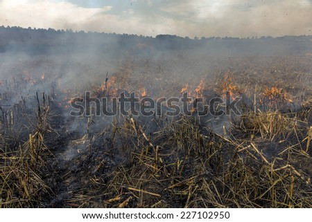 Severe drought. Fires agricultural fields to dry completely wind farms. Emergency Ukraine brings regular damage to nature and the regional economy.