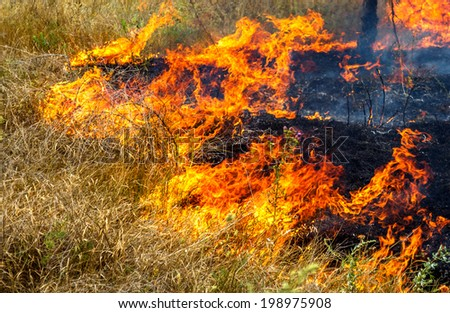 Severe drought. Forest fires in the dry wind completely destroy the forest and steppe. Disaster for Ukraine brings regular damage to nature and the region's economy. - stock photo