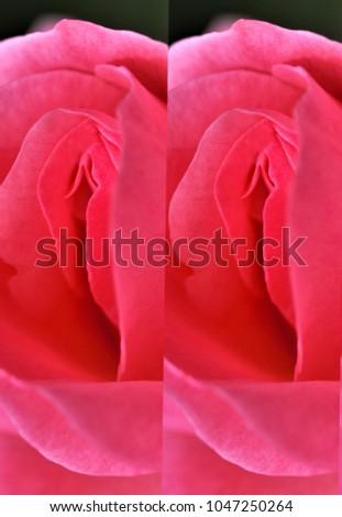 Nude erotic girls open asses